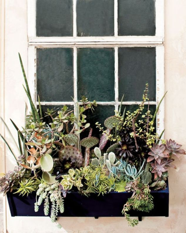 Love this for a back door window box!